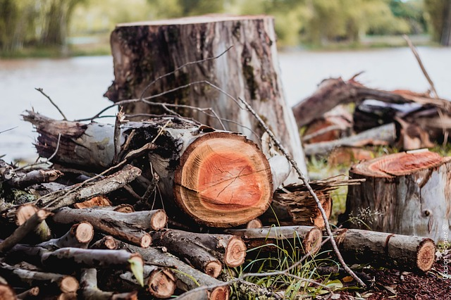 Troncos de madera para adorno